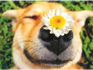 flower_nose_cute_dog_pic